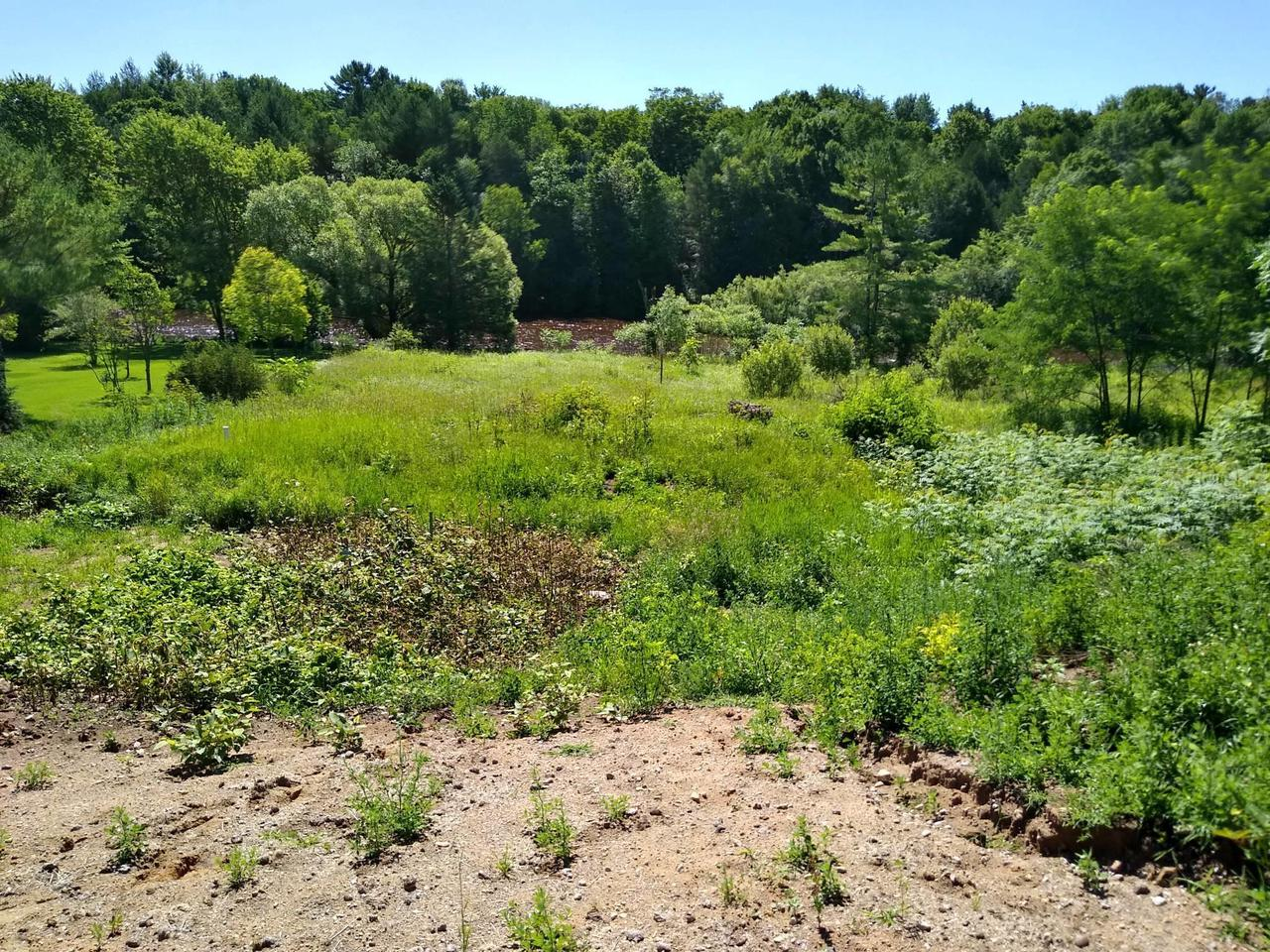 View Vacant Land For Sale at W2299 State Road 22, Gillett, WI
