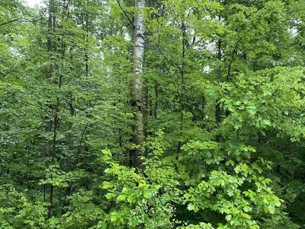 View Vacant Land For Sale at ON HAGAR CITY ROAD #Sale 2043-1, Merrill, WI
