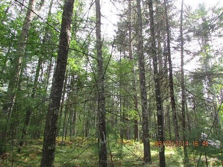 View Vacant Land For Sale at Lt 3 White Pine LN, Pembine, WI