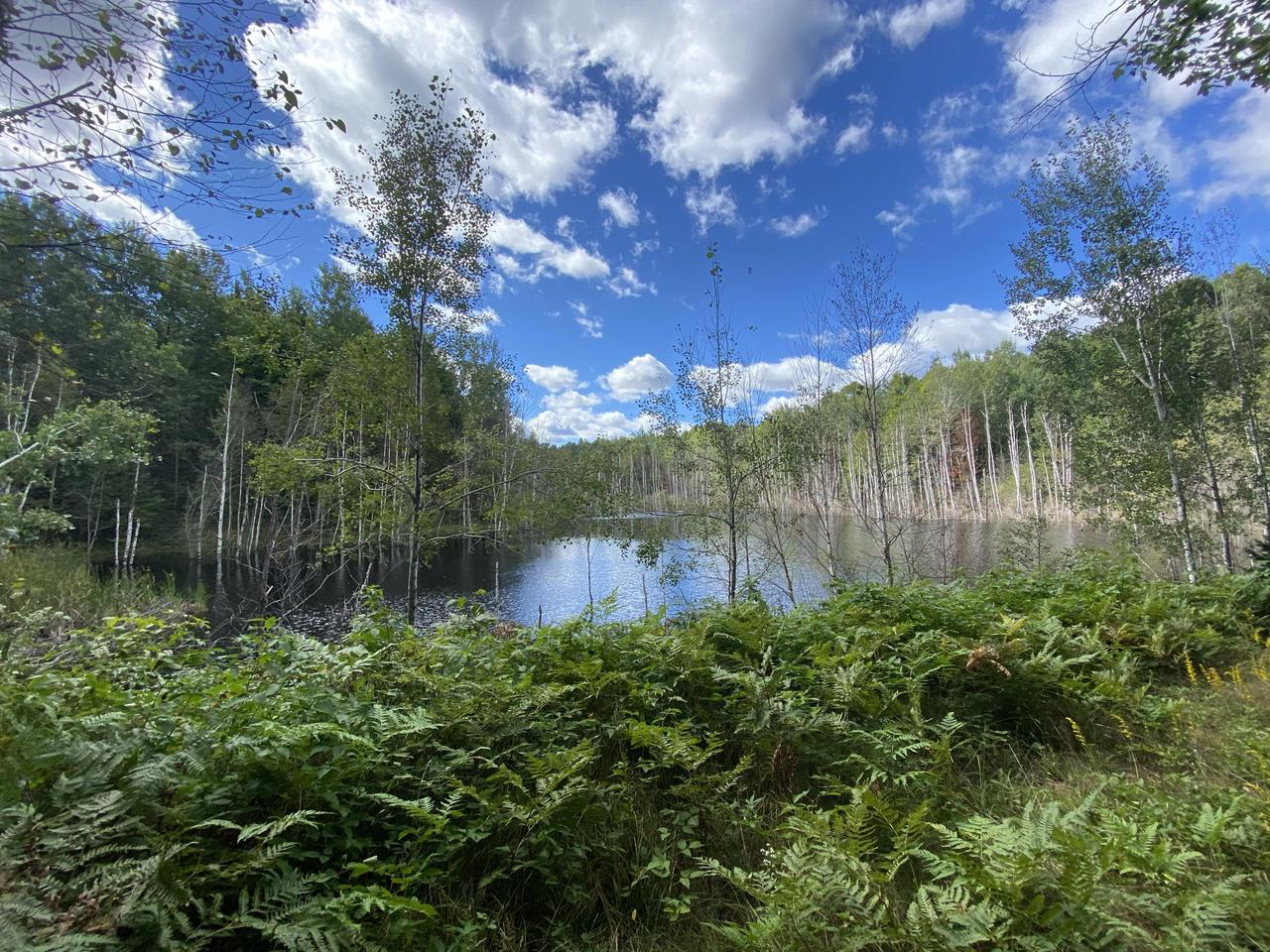 View Vacant Land For Sale at N13500 Harper Rd, Silver Cliff, WI