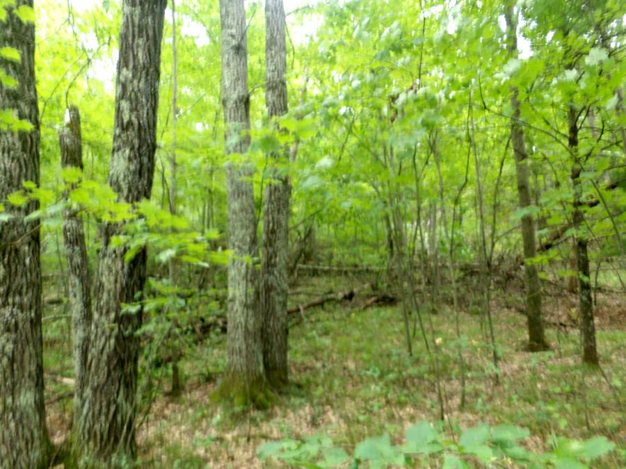 View Vacant Land For Sale at Lt 3 Parkway Rd, Silver Cliff, WI