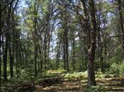 View Vacant Land For Sale at 57.44 ac County Road X, Crivitz, WI